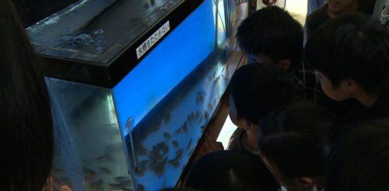 #11ヒラメの水槽をのぞく子ども達