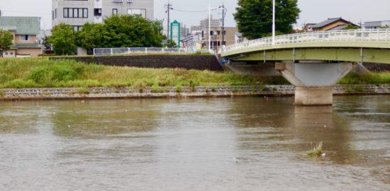犀川のゴミ - 1