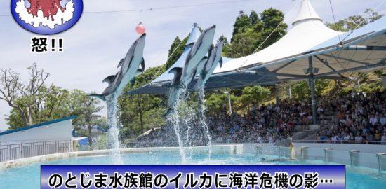 イルカと海ゴミ-1